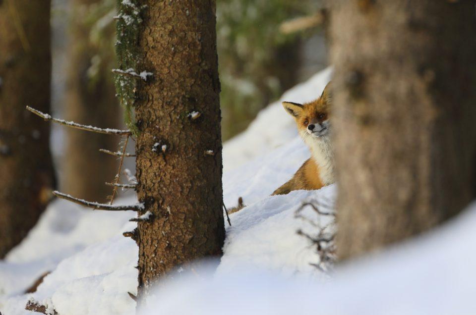 Echipamentul necesar pentru fotografia wildlife-partea II