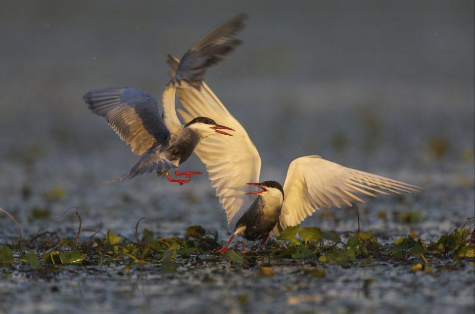 Echipamentul necesar pentru fotografia wildlife-partea I