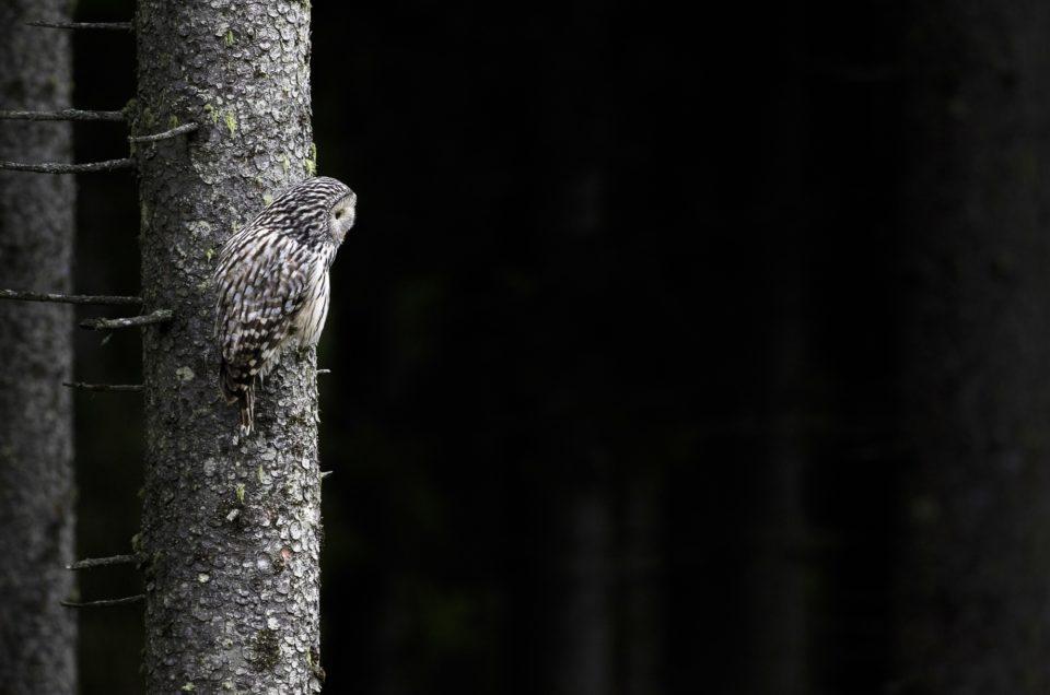 Fotografierea pasarilor salbatice – editia II – II