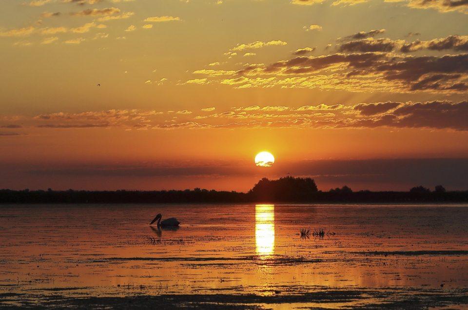 Fotografierea pasarilor salbatice – editia II – I